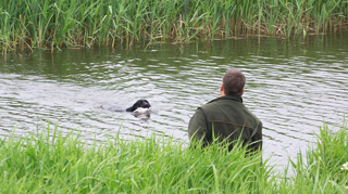 Hundetrning1.jpg